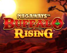 Buffalo Rising Megaw